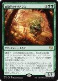 《血胞子のトリナクス/Bloodspore Thrinax》【JPN】[C15緑R]