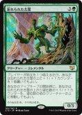 《忘れられた古霊/Forgotten Ancient》【JPN】[C15緑R]