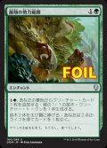 《菌類の勢力範囲/Fungal Plots》FOIL【JPN】[DOM緑U]