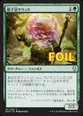《胞子冠サリッド/Sporecrown Thallid》FOIL【JPN】[DOM緑U]