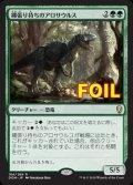 《縄張り持ちのアロサウルス/Territorial Allosaurus》FOIL【JPN】[DOM緑R]