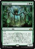 《孵卵場の蜘蛛/Hatchery Spider》【JPN】[GRN緑R]