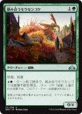 《絡み合うモウセンゴケ/Grappling Sundew》【JPN】[GRN緑U]