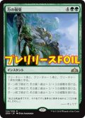 《力の報奨/Bounty of Might》FOIL【JPN】[PRM緑R]
