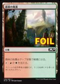 《森林の地溝/Timber Gorge》FOIL【JPN】[M19土地C]