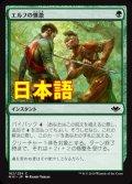 《エルフの憤激/Elvish Fury》【JPN】[MH1緑C]