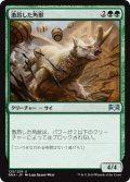 《激昂した角獣/Enraged Ceratok》【JPN】[RNA緑U]