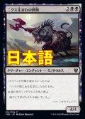 《ニクス生まれの匪賊/Nyxborn Marauder【JPN】[THB黒C]