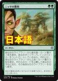 《ニッサの勝利/Nissa's Triumph》【JPN】[WAR緑U]