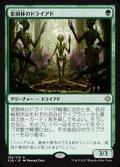 《老樹林のドライアド/Old-Growth Dryads》【JPN】[XLN緑R]