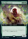 《夢の円環のドルイド/Circle of Dreams Druid(383)》【JPN】[AFR緑R]