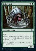《棘投げの蜘蛛/Stingerfling Spider(258)》【JPN】[CMR緑U]