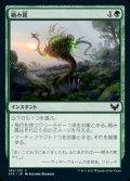 《絡み罠/Tangletrap(145)》【JPN】[STX緑C]