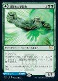 《増強者の拳闘家/Augmenter Pugilist(147)》【JPN】[STX緑R]